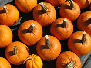 Top-down view of lots of orange pumpkins.