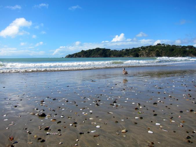 NZ: Waiheke