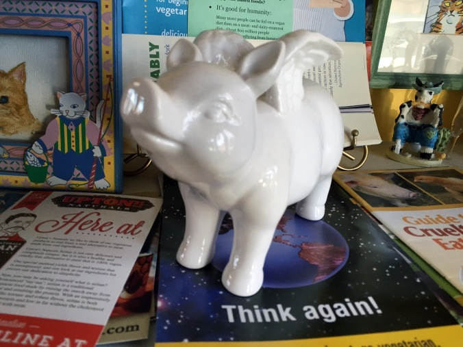 Pig and pamphlets at the Ginger Cat B&B in Watkins Glen, NY
