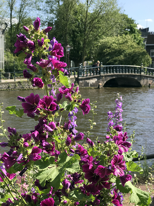 Amsterdam flowers and bridge