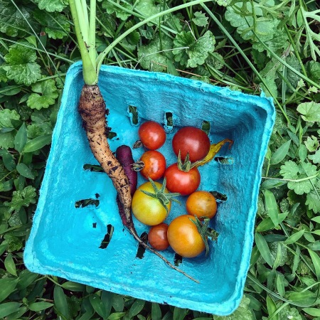 Cherry tomatoes from the garden in a blue basket