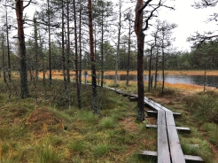 Lahemaa National Park bog, Estonia