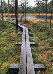 Lahemaa National Park bog, Estonia